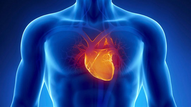 Cardiologist In Ajman